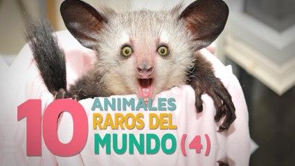 10 Animales raros del mundo | Fascinantes y curiosos 4