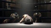 Marmottes France 3 - ROCKY
