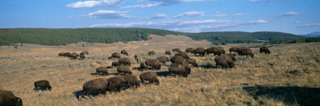 The wild animals of the United States