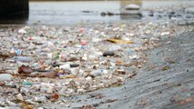 The victims of the Great Pacific Garbage Patch