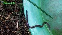 Vers de serpent nageant dans l'eau - Vers de terre