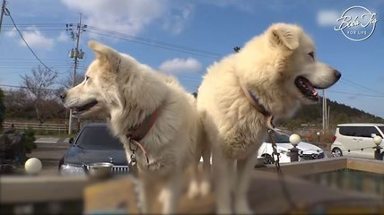 Sibling dogs left their house to live on the roof for... more than 3 years: Are two better than one?