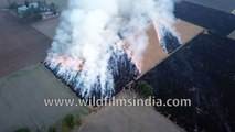 Crop Burning in Punjab leads to air pollution across north India- see aerial view of dreadful fire