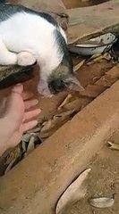 Ce chat est-il mort