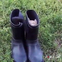 2 chatons qui jouent ensemble dans des bottes ! Trop MIGNON !