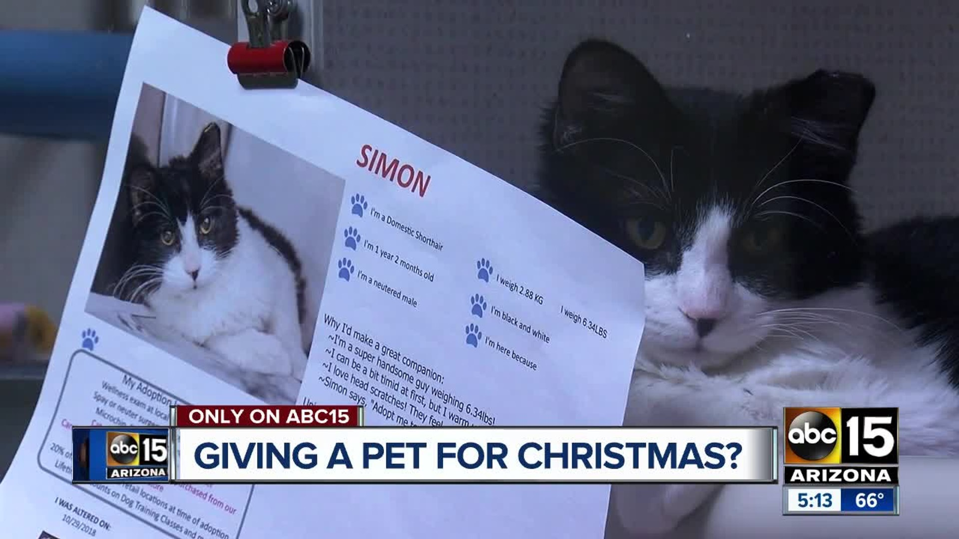 Is a pet on your Christmas list? Questions to ask before giving a pet for Christmas