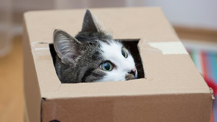 Cat Mistakenly Shipped More Than 700 Miles From Home