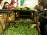 How Its Made Season 2 Episode 5 Hydroponic Lettuce Construction Wood Recycling Fishing Flies