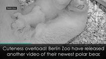 Adorable polar bear cub thriving at Berlin Zoo