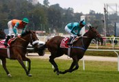 A Beginner's Guide to Horse Racing