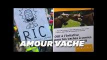 """Les votations """"exotiques"""" suisses vus de France font bien rire les Suisses"""