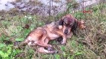 Köpeğe Araç Çarptı, Yoldan Geçen 112 Acil Ekibi Müdahale Etti, Askerler Barınağa Götürdü