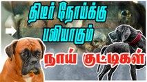 திடீர் நோய்க்கு பலியாகும் நாய் குட்டிகள் | Canine Distemper Virus Attack On Dogs |Dangerous Virus Diseases