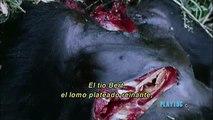 Dian Fossey - Ep2 - El Lado Oscuro de la Montaña