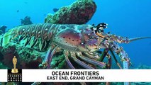 Dive Grand Cayman's East End with Ocean Frontiers