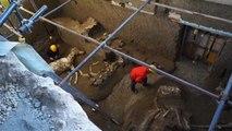 Les restes d'un cheval retrouvés presque intacts à Pompéi