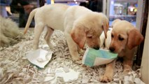 UK Bans Third-Party Sales of Puppies And Kittens
