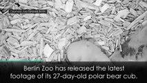 Adorable four-week-old polar bear cub filmed at Berlin Zoo