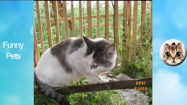 Funny Pets #6- Funny, Clever Cats, Best Pets Compilation, Dog Tricks, Pet Animals Agility