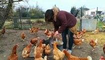 Monteux : elle vole au secours des poules destinées à l'abattoir