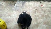 Kedi ile Köpeğin İlginç Dostluğu...köpeğin Sırtında Mama Bekleyen Kedi Gülümsetti