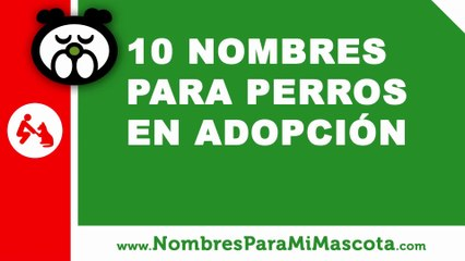 Perros en adopción, ideas de nombres - nombres de mascotas - www.nombresparamimascota.com