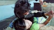 Ajanabee Full Movie Video Songs Jukebox   Happy Birthday Zeenat Aman   Rajesh Khanna   R. D. Burman