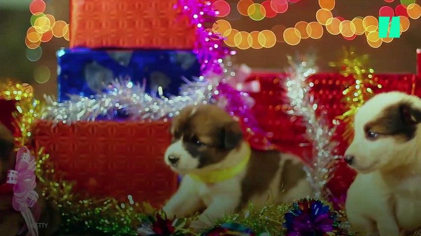 Aleja a tus mascotas de las plantas navideñas