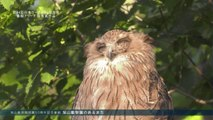 【第44回日本ケーブルテレビ大賞 番組アワード受賞作品】 旭山動物園開園50周年記念番組 旭山動物園のあるまち