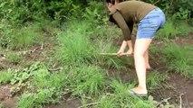 Primitive Wilderness - Trouvez des grenouilles dans la forêt et cuisinez-les en train de manger - Primitive Wilderness- Find Frogs in the forest and Cooking Frog eated Delicious