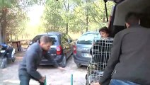 Galgos: Are Spain's greyhounds mistreated? | Focus on Europe
