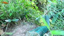 Amazing! Easy Snake Trap Using Metal Net & Fish - How To Find And Catch Big Snake By Snake Trap