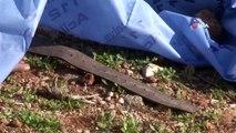 - Antalya'da şüpheli ölüm: Kolunda pantolon kemeri takılı erkek cesedi bulundu
