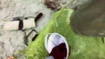 Un plongeur combat un requin en pleine mer