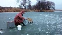 Un petit renard sauvage vient voler les poissons de ces pecheurs russes