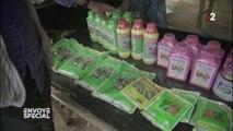 Dans certaines plantations de cacao en Côte d'Ivoire, des enfants manipulent du glyphosate sans protection