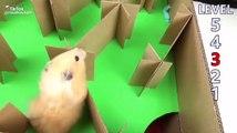 Un hamster traverse un labyrinthe à cinq niveaux très facilement