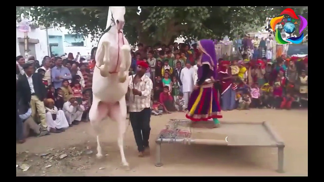 Funny Dancing Horses Compilation – Funny Trained Dancing Horse