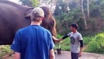 Cet éléphant fait le bruit du T-Rex de Jurassic park...