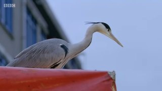 Cities Natures New Wild S01E03 Outcasts 2019 Documentary Ser