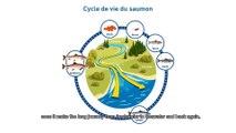 Discours de la France lors du lancement de l'Année internationale du saumon