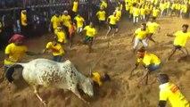 Jallikattu kick-starts in Tamil Nadu with stricter norms