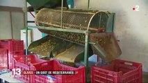 Alpes-Maritimes : les olives font la fierté de la région