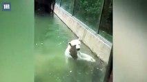 Un ours polaire essaye de ramener un oiseau à la vie