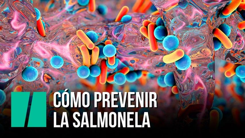 Cómo prevenir la salmonela
