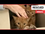 11 cats rescued after being left for dead in alleyway | SWNS TV