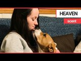 Girl who could die from any strong smell is saved by a specially-trained dog | SWNS TV