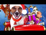 UP ON THE WOOFTOP Trailer (Family Film - 2015)
