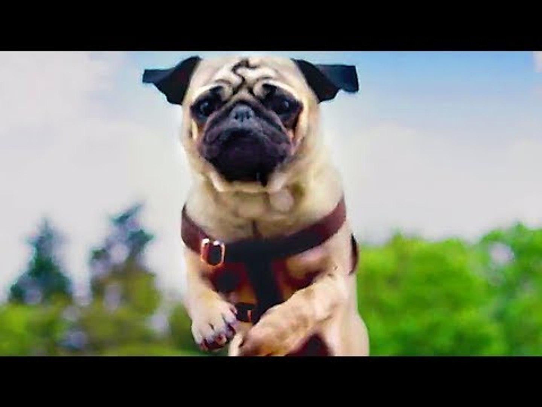 PATRICK Trailer (2018) Kids & Family, Dog Movie
