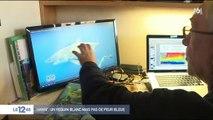 Hawaï : un requin blanc mais pas de peur bleue